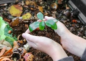 Hands holding seedling over a compost bin